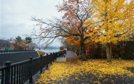 Preview wallpaper Park, trees, yellow leaves, autumn, fence, river