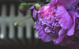Aperçu fond d'écran Pivoine rose, pétales, brumeux