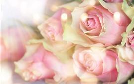 ピンクのバラ、かすんでいる、ロマンチックな