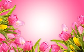Pink tulips, pink background