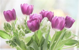 Preview wallpaper Purple and green tulips, flowers