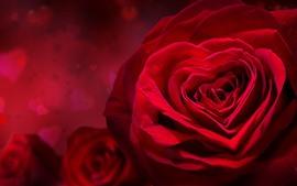 미리보기 배경 화면 빨간 장미, 사랑의 마음, 꽃잎, 낭만적 인