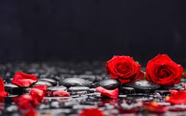 Preview wallpaper Red roses and petals, stones, water