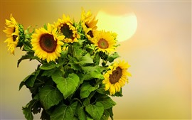 Sunflowers, sun