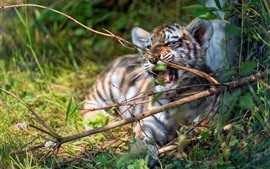 Preview wallpaper Tiger cub playful, twigs, grass