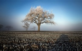 Winter, tree, fields, frost