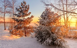 Preview wallpaper Winter, trees, snow, sunset