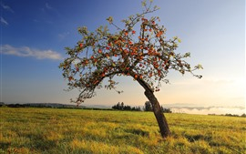 Preview wallpaper Apple tree, many ripe apples, grass, sunshine