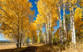 Preview wallpaper Autumn, birch, forest, golden leaves