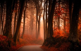 Autumn, red leaves, trees, road, fog
