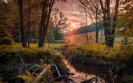 Preview wallpaper Autumn, trees, stream, sunset