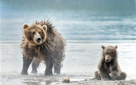 Preview wallpaper Bear mother and cub, water splash, river shore