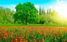 Preview wallpaper Beautiful summer, red poppy flowers, green grass and trees, sun rays