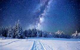 Beautiful winter, trees, forest, snow, starry, stars