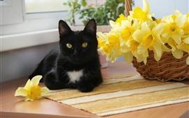 Preview wallpaper Black cat, yellow daffodils