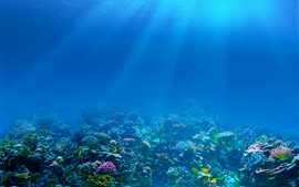 Preview wallpaper Blue sea, underwater, sun rays, fish, coral