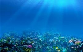 Mar azul, debaixo d'água, raios de sol, peixe, coral