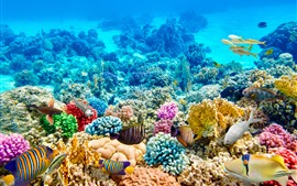 Preview wallpaper Colorful fish, corals, underwater