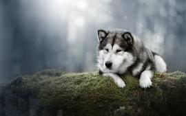 Cão bonito, musgo