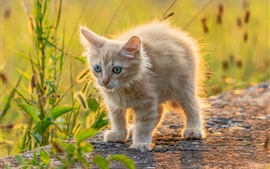 Preview wallpaper Cute furry kitten, backlight