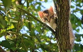 Preview wallpaper Cute kitten, tree, leaves, sun rays