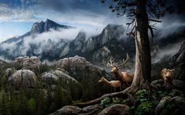 Deer, horns, mountains, trees, fog, birds