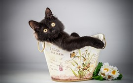 Preview wallpaper Furry black kitten, cute, basket, flowers