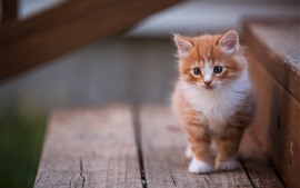 Preview wallpaper Furry kitten, cute pet, stairs