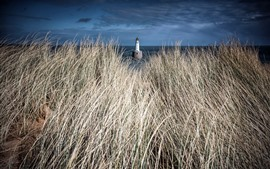 Grass, lighthouse, sea