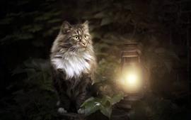 Gato cinzento e lâmpada, folhas