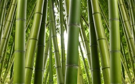 Preview wallpaper Green bamboo, nature