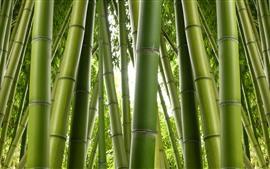 미리보기 배경 화면 녹색 대나무, 자연