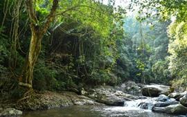 预览壁纸 丛林,树木,小溪,岩石