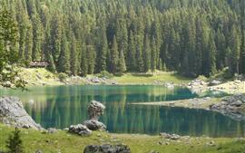 Lago Carezza, árvores, Itália