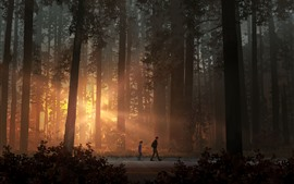 Preview wallpaper Life is Strange 2, game art picture, forest, sun rays