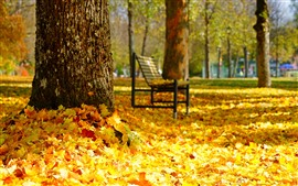 Preview wallpaper Many golden maple leaves, bench, trees, autumn, park