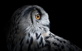 Owl head, eye, black background