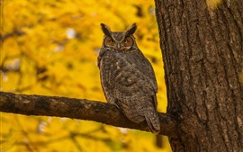 Preview wallpaper Owl, tree, yellow background