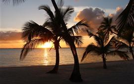 Palm trees, sunset, clouds, beach