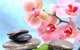 壁紙のプレビュー ピンクの胡蝶蘭、石