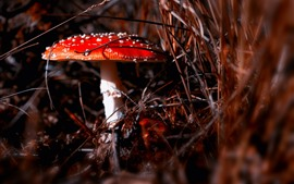 Preview wallpaper Red mushroom, white point