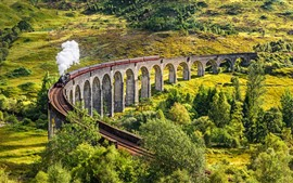 Preview wallpaper Scotland, train, smoke, viaduct, trees, countryside