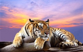 Preview wallpaper Tiger, rest, paws, red sky, sunset