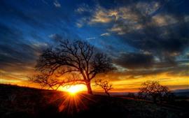 Дерево, солнечные лучи, силуэт, закат, сумерки