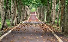 Árvores, estrada, folhas, outono