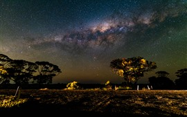 Preview wallpaper Trees, starry, sky, night, beautiful scenery