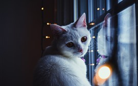 Preview wallpaper White cat look back, window, lights