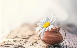 Preview wallpaper White daisy, hazy background