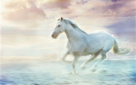 Preview wallpaper White horse running, water, art picture