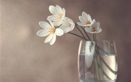 Preview wallpaper White orchid, glass cup, hazy